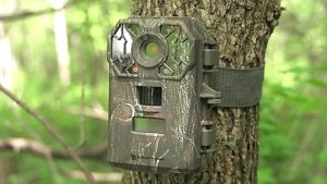 Using Trail Cameras for Hunting Big Game